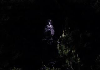 Deep in the Shadows