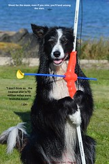 Shoot for the moon (ASHA THE BORDER COLLiE) Tags: bow arrow funny dog picture shoot moon quote sea ashathestarofcountydown connie kells county down photography