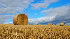 Harvested and Baled. (Flyingpast) Tags: field harvest crop farm stubble bales round sky autumn agriculture countryside farming scotland clouds blue landscape straw