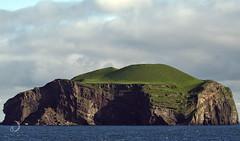 Vestmannaeyjar (bd168) Tags: île island sea mer islande iceland cliffs falaises ensoleillé sunny volcanique volcanic seabirds oiseauxmarins em10markii m14150mmf456iied