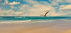 The beach and the seagull. (Aglez the city guy ☺) Tags: miamifl miamibeach sobe beach beachscape beachshore seashore seascape seagull clouds blue sand waves outdoors phonephotos urbanexploration waterways walkingaround walking