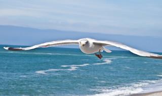 Flügel / Wings