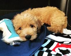 Yogi is one of Kasey's boy