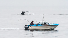 The One That Got Away! (RussellK2013) Tags: nikon nikkor ngc nature nationalgeographic water sea ocean boat whale humpback humpbackwhale fluke fishing fishermen angling outdoor britishcolumbia canada sointula berepoint 300mmf4epfedvr 300mm prime tc14eiii teleconverter d500