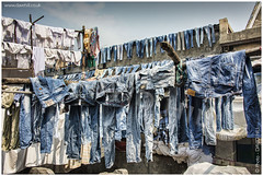 Denim Delight (channel packet) Tags: india mumbai dhodi ghat washing laundry clothing outdoor davidhill
