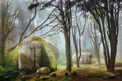 Sintra Dreams III (J C Mills Photography) Tags: sintra portugal cascais peninha forest fog