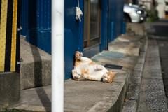 猫 (fumi*23) Tags: ilce7rm3 sony 85mm sel85f18 fe85mmf18 katze neko cat gato animal chat bokeh street alley ねこ 猫 ソニー 路地 街