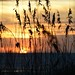 Cocoa Beach sunrise, Brevard County 26