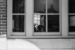 DSCF2920 (Jake Zerkel) Tags: fujifilm xe1 nikon nikkor 50mm f12 ais street photography