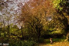 under the wood (Felicis_Flower) Tags: tree forest animal dog tier australianshepherd redmerle wemmetsweiler saarland sky