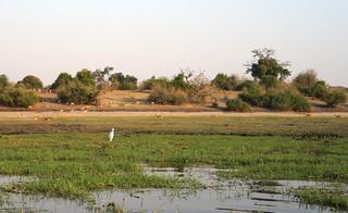 Chobe Riverfront Landscape