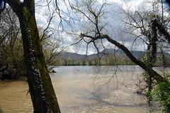 ReedyCreekFlowingIntoHolstonRiver (T's PL) Tags: nikon tamron 16300 f3563 di ii vc pzd alonggreenbelt alongkingsporttngreenbelt d7000 holstonriver kingsporttennessee kingsporttn nikond7000 reedycreek tennessee nikontamron tamronnikon tamron16300 water alonggreenbeltinkingsporttn greenbelt tamron16300f3563diiivcpzd tree trees river sky clouds