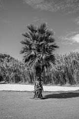 DSC_4081 (mark.clayton.photography) Tags: evening dark night lights sttropez sea sunset palm trees waves sky