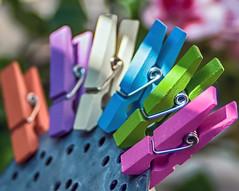 Multicolour (3OPAHA) Tags: multicolour colours hmm macromondays sony