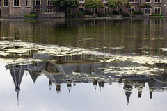 Fifty fifty © Inge Hoogendoorn (ingehoogendoorn) Tags: denhaag thehague hofvijver upsidedown reflection reflectie reflections water spiegeling