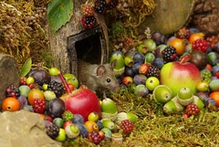 wild mouse with fruits and berry's (2) (Simon Dell Photography) Tags: wild george log pile house mouse nature garden animal rodent cute fun funny summer fruits berries berrys display lots bounty moss covered simon dell photography sheffield 2018 aug cool awesome countryfile ears close up high detail cards design