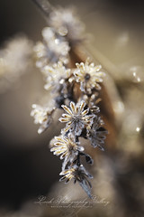 ... delicate... (Beth Crawford 65) Tags: nature flora autumn frost delicate crystals icy field forest michigan clarkston greatlakes lookphotographygallery bethcrawford warmcolors outdoors woods