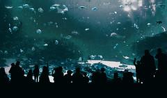 aquarium (skye-skye) Tags: aquarium aqua fish fishes aquatic water ocean sea salt salty saltwater ga georgia georgiaaquarium downtown atlanta downtownatlanta