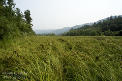 The Green, Green Grass of the Gorge (Gary L. Quay) Tags: grass columbiagorge columbia river gorge oregon floodplain