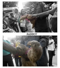 The case of the sloth: (Guilherme Alex) Tags: nature animal face brazil fauna beautiful wonderful daybyday people natural save