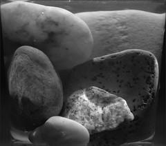 """Macro Mondays"" -  ""Rock"" - DSC_4923 (FMAG) Tags: ""rock"" macromondays rock stone"