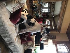 Kramer (Alpen Schatz - Mary Dawn DeBriae) Tags: happy customer alpenschatz bernesemountaindog dog swissdogcolar hunterswisscrosscollar doggles stein