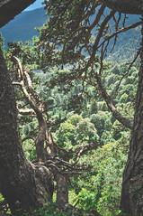 DSC_0126 (Hilðr) Tags: mountains trees rocks forest woods view horizon canyon hills pine stones moss norse inspiration spirit hiking dark