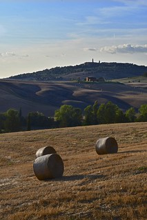 Tuscan Summer postcard