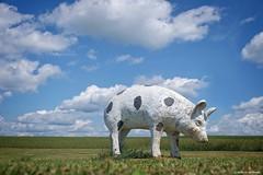 When pigs....land.... (Joe Hengel) Tags: whenpigsland ephrata ephratapa lancastercounty farm pig clouds cloudsbluesky sky summer summertime grass field