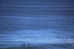 IMG_3633 (gervo1865_2 - LJ Gervasoni) Tags: surfing with whales lady bay warrnambool victoria 2017 ocean sea water waves coast coastal marine wildlife sealife blue photographerljgervasoni