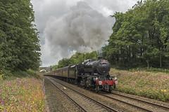 Brief Encounter (4486Merlin) Tags: 48151 england europe exlms lms8fbigeight northwest railways steam transport unitedkingdom chorley gbr briefencountersteamspecial carnforthstationheritagecentre wcrc hoghtonbottom himalayanbalsam