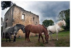 Ruinas del Colegio de San Lorenzo del barrio de Ahedo de Carranza (Bizkaia) (rocagua) Tags: seleccionar ahedo carranza vizcaya