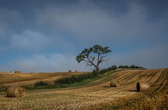 Morning mist clearing, West Lothian. (AlbOst) Tags: morningmist mistclearing westlothian bales haybales trees