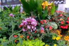 Blumenbeet (patric.gangler) Tags: pflanzen blumen blumeninderstadt blumenbeet saarbrücken landeshauptstadt saarland germany weitwinkel 35mm nikonfotografie nikonphotography nikonphotographers nikon1photography 1nikkorvr6713mm nikon1j3 nofilter