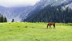 Nature (Rizwan_Saeed) Tags: upperdir kpk pakistan jahazbanda meadows nikon nature photography landscape scene tree green sky dilshadrazi love cool beauty