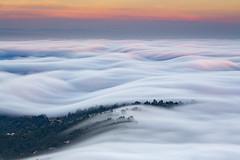 System Override (dsafanda) Tags: marin fog mount tamalpais mttamalpais mttam tam bay area