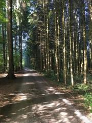 IMG_2978 (eduard43) Tags: natur nature rafz sonne sun waldwege wald forest forestpaths schweiz 2018 iphone