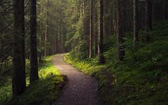 Alpine Forest (Netsrak) Tags: at alps baum bäume europa europe kleinwalsertal landschaft natur nebel wald fog landscape mist nature trees österreich schwarzwasser alpen