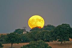 IMG_1575a (berserker170) Tags: fullmoon lunallena luna moon night noche eos canon eoscanon7d sigma sigma150500 flickrexploreme canon7d sigma150600 naturalezacautivadora