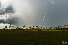 Mahogany Hammock Lightning (J.Coffman Photography) Tags: big cypress everglades national park landscape trees swamp water reflections florida united states forest marsh clouds nikon d810 hike hiking wilderness sunshine fl state preserve wet season grass tree sky field lightning mahogany hammock storm