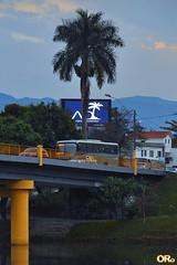 Coconut trees (Otacílio Rodrigues) Tags: montanha árvores trees coqueiros coconuttrees ponte bridge veículos vehicles painel lightpanel rio river urban resende brasil oro