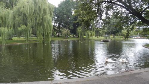 Boston, the Lagoon in Boston Public Garden [13.08.2013]