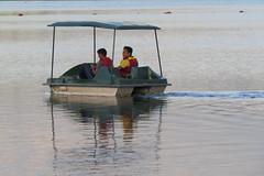 IMG_4961 (mohandep) Tags: madivala lakes bangalore wildlife scenery sun flowers insects birding buses