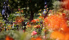 West Green (amazingstoker) Tags: west green house nt national trust boke bokeh front back gardens flowers iron work colour sun hampshire orange pink rose bud trellis cast wrought
