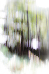 Trees (judy dean) Tags: 2018 judydean lensbaby lakedistrict northpenines trees icm