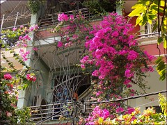 Vietnam HCMC Balcony Flowers 20180221_134516 DSCN3556 (CanadaGood) Tags: asia asean seasia vietnam hcmc hochiminhcity saigon building flowers canadagood 2018 thisdecade color colour