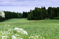 Pelto (nousku) Tags: mmp suomi finland sysmä tamron landscape