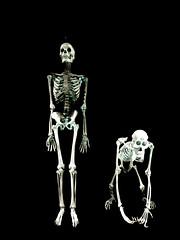 Oh Brother (Steve Taylor (Photography)) Tags: asia singapore borneanorangutan pongopygnaeus primate homindae skeleton bones human hom0osapienslinnaeus animal minimalism minimalistic blackandwhite monochrome contrast