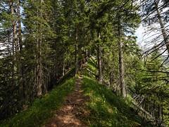La Gruyère - Jaun / Ref.02348 (FRIBOURG REGION) Tags: suisse switzerland schweiz fribourgregion fribourgrégion lagruyère jaun grandtourdesvanils été sommer summer préalpes voralpen prealps alpes alpen alps montagne mountains berge sky himmel ciel fribourg landschaft paysage landscape