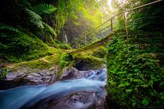 Junglebridge (dannygreyton) Tags: indonesia bridge waterfall jungle forest water longexposure longexposureshot bali fujifilmxt2 fujinon1024mm fujifilm nature river stream sekumpul light fern hike hiking sekumpulwaterfall